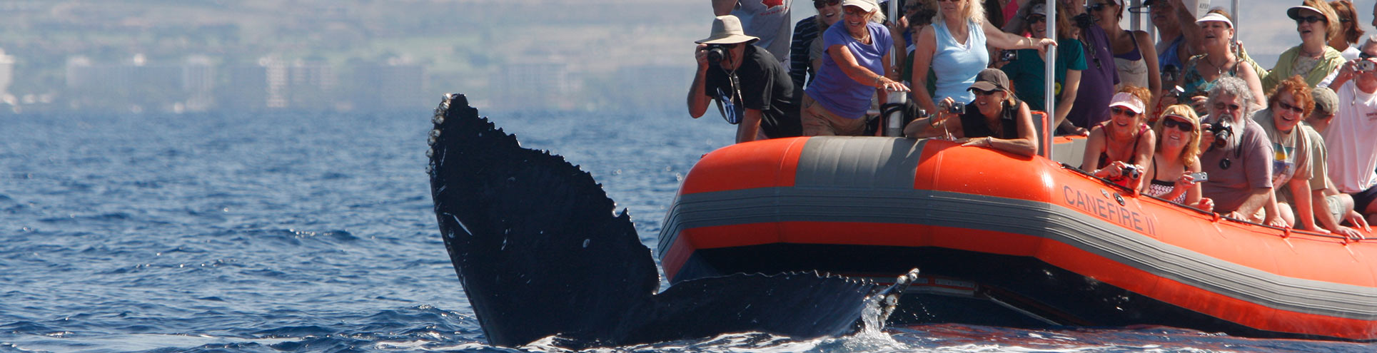 Whale Tails Inches Away