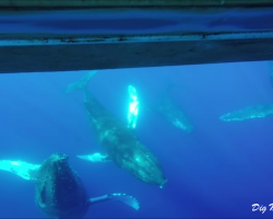 Whales under the raft!