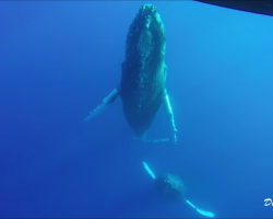 Whales next to the raft!