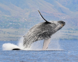 The water coming off this whale is awesome!