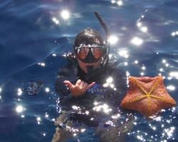 Snorkeling with pincushion seastar