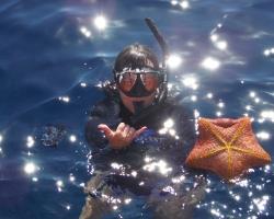 Snorkeling with pincushion seastar