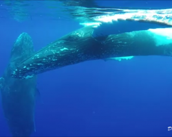 Two whales next to the raft