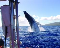 Whale of a breach