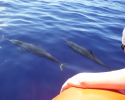 Dolphins next to raft