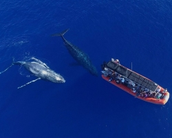 Whales mugging the raft