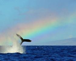 Jennifer Jensen's rainbow tail